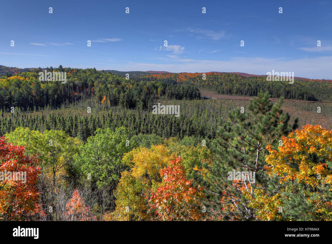 An Algonquin forest overlook in fall - Stock Image