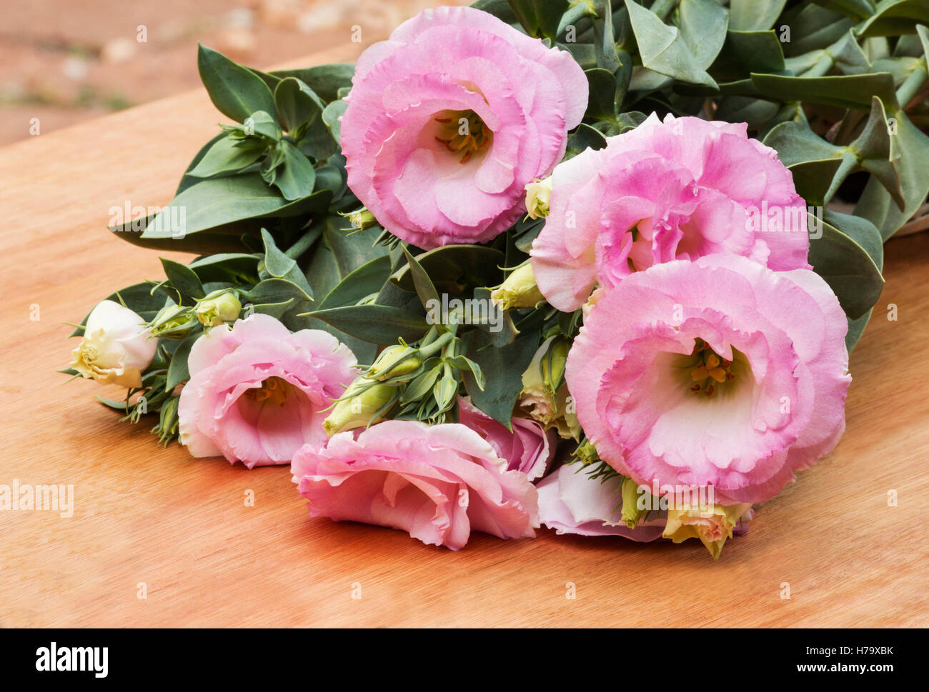 Pink lisianthus plant in flower on a wooden table stock photo pink lisianthus plant in flower on a wooden table mightylinksfo