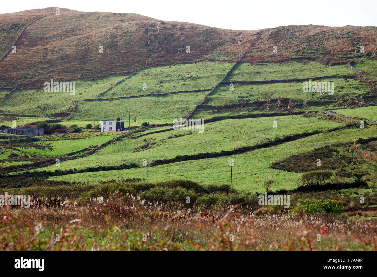 Hill farming in County Kerry, Ireland - Stock Image