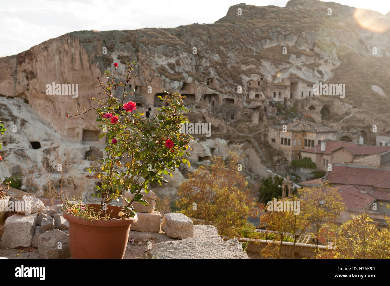 Rose on terrace of hillside in Urgup, with view of cave dwellings. Cappadocia in Nevsehir Province, Turkey - Stock Image