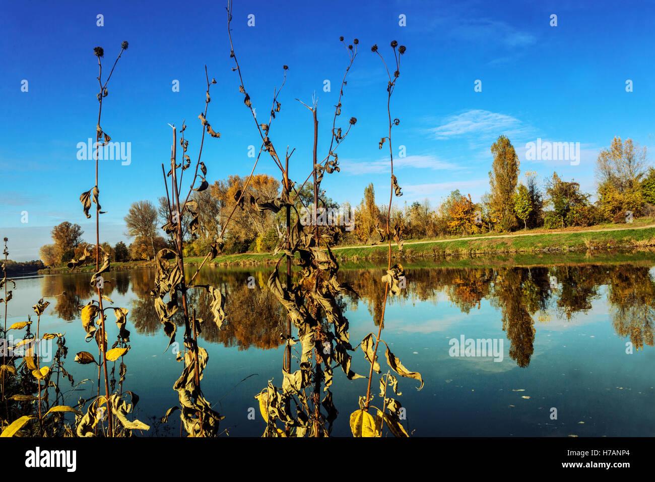 Autumn colors along the Elbe River, Central Bohemia, Czech Republic - Stock Image