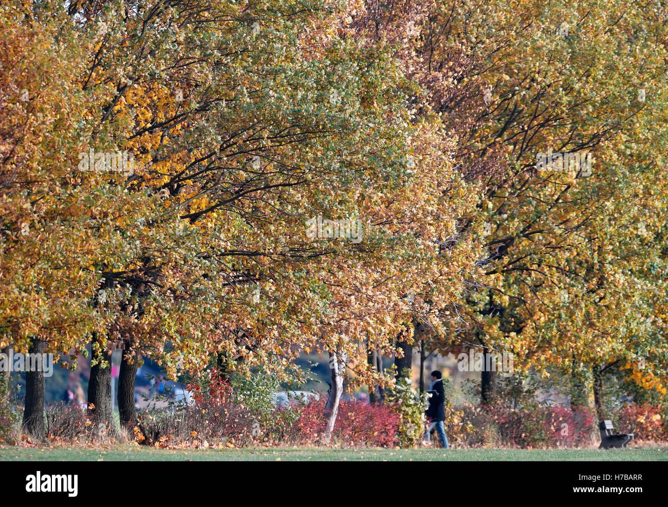 Berlin, Germany. 3rd Nov, 2016. A woman walks between autumnal-coloured trees at Tempelhofer Feld in Berlin, Germany, - Stock Image