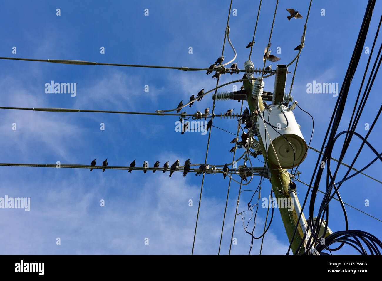 Birds On Wires Stock Photos & Birds On Wires Stock Images - Alamy