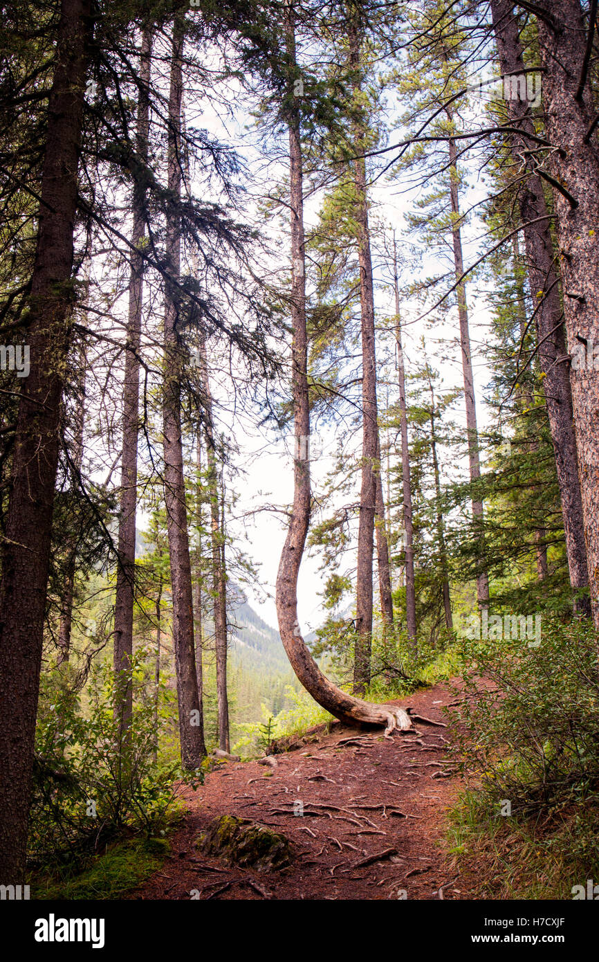 The trees - Stock Image