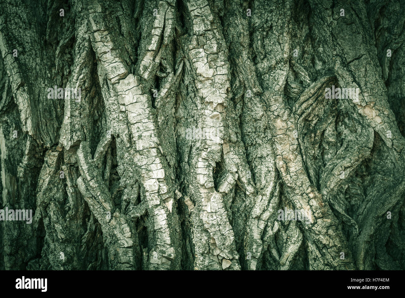 Tree bark green color background, vertical lines, horizontal Stock ...