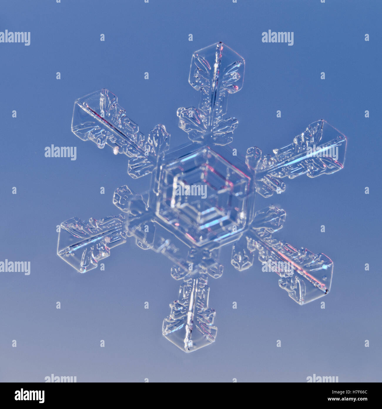 Snowflake magnified under microscope Stock Photo