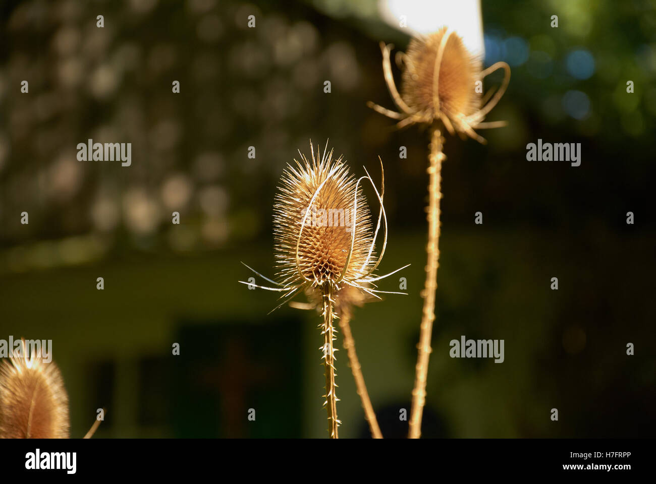 Wild plants growing just outside the Munich Olympic Park. - Stock Image