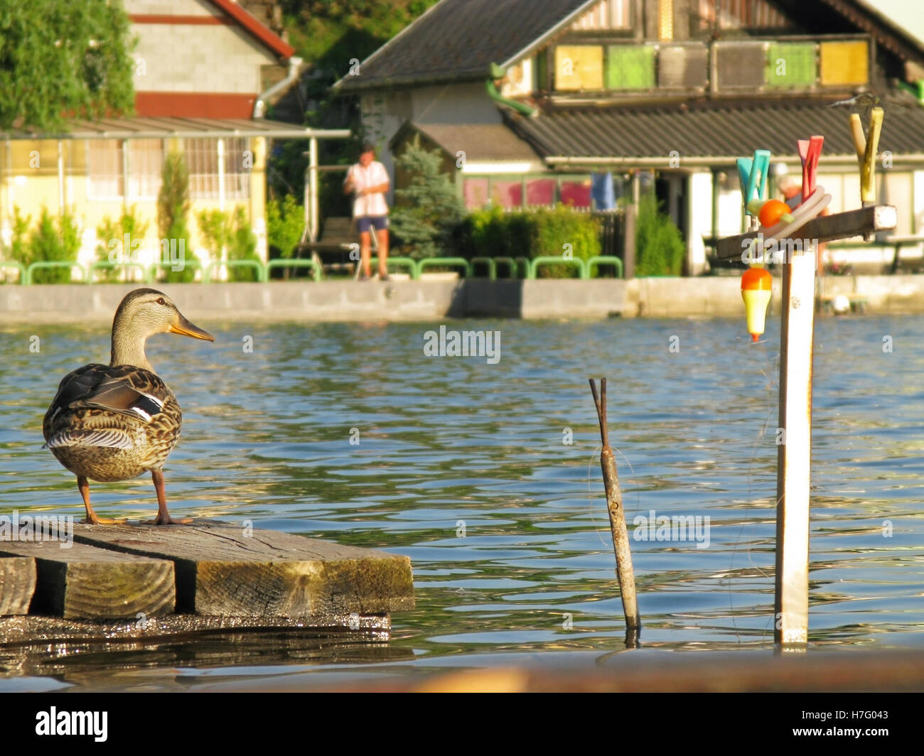 Fishing pier with duck and tackles - Stock Image