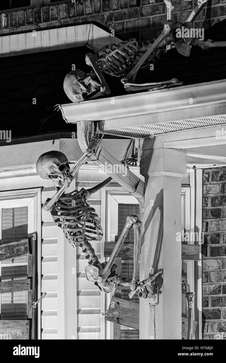 Skeletons climb a porch. Halloween decorations. Halloween yard display. - Stock Image