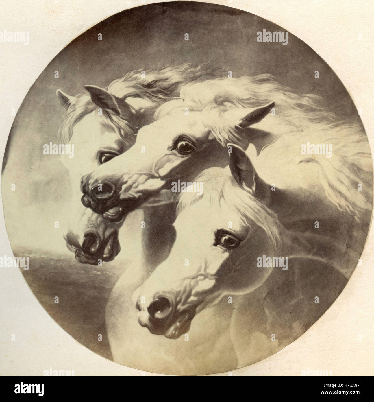 The Heads Of Three White Horses Painting Stock Photo Alamy