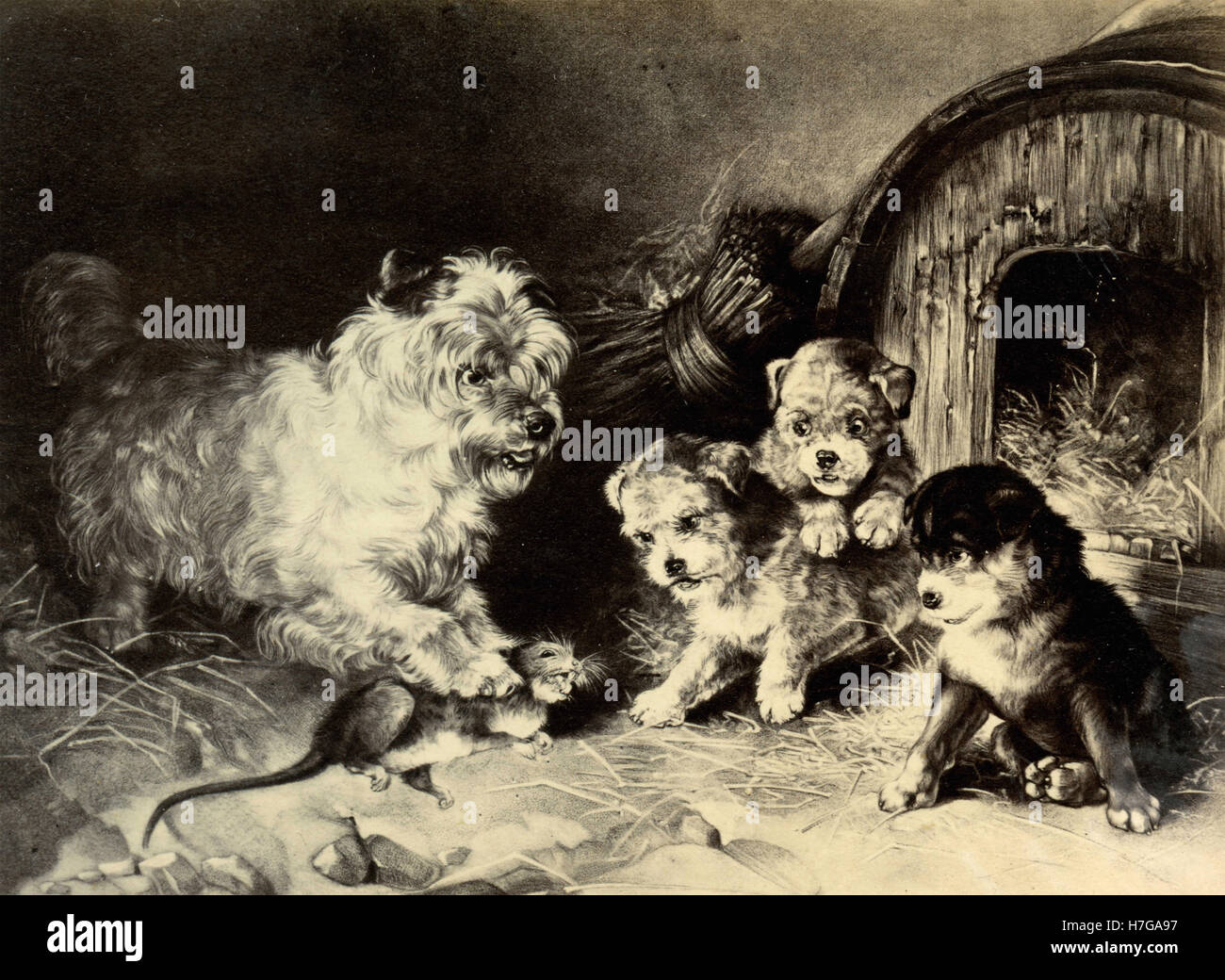Mommy Dog Shows The Puppies To Catch A Mouse Painting Stock Photo