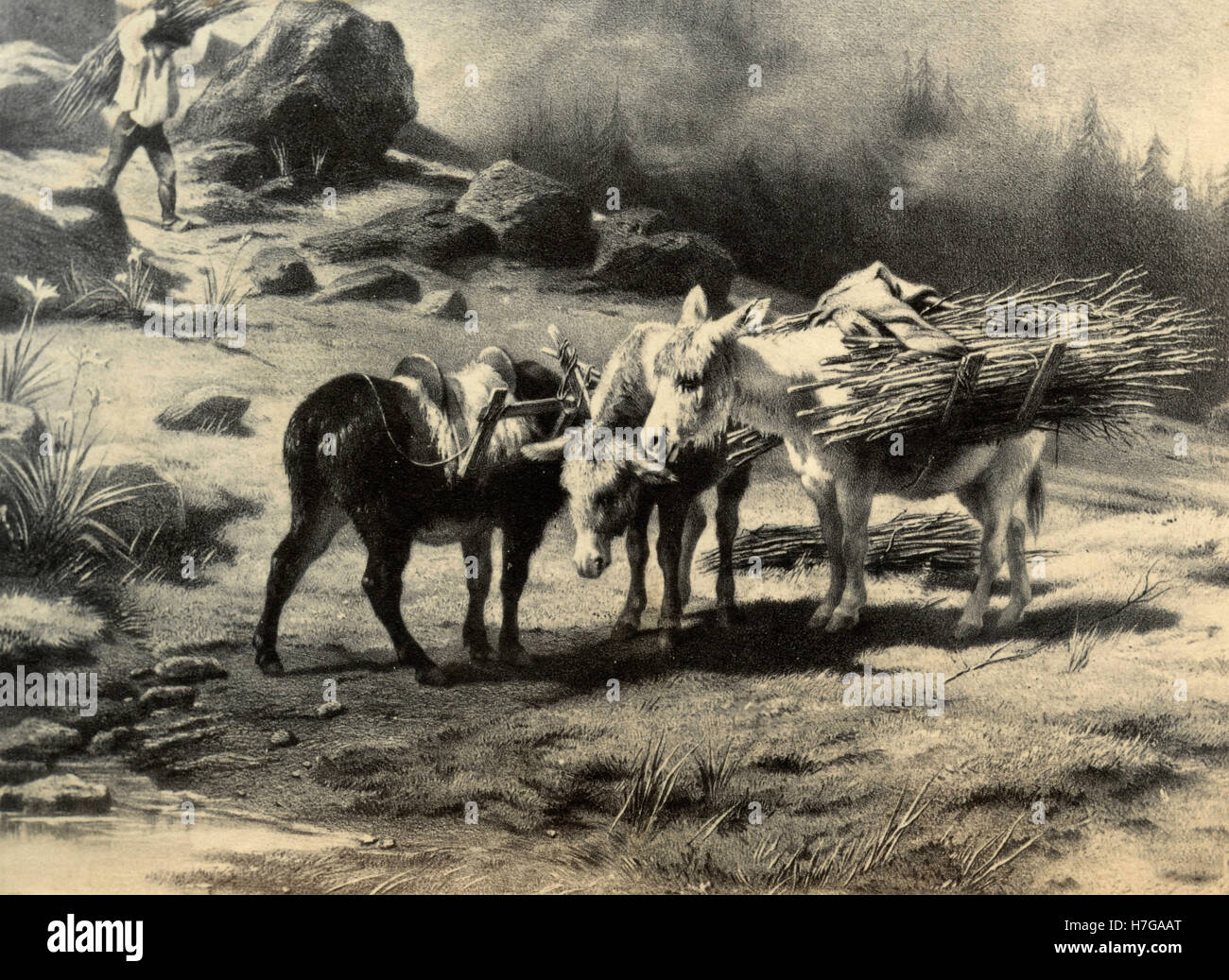 Three working donkeys, etching - Stock Image