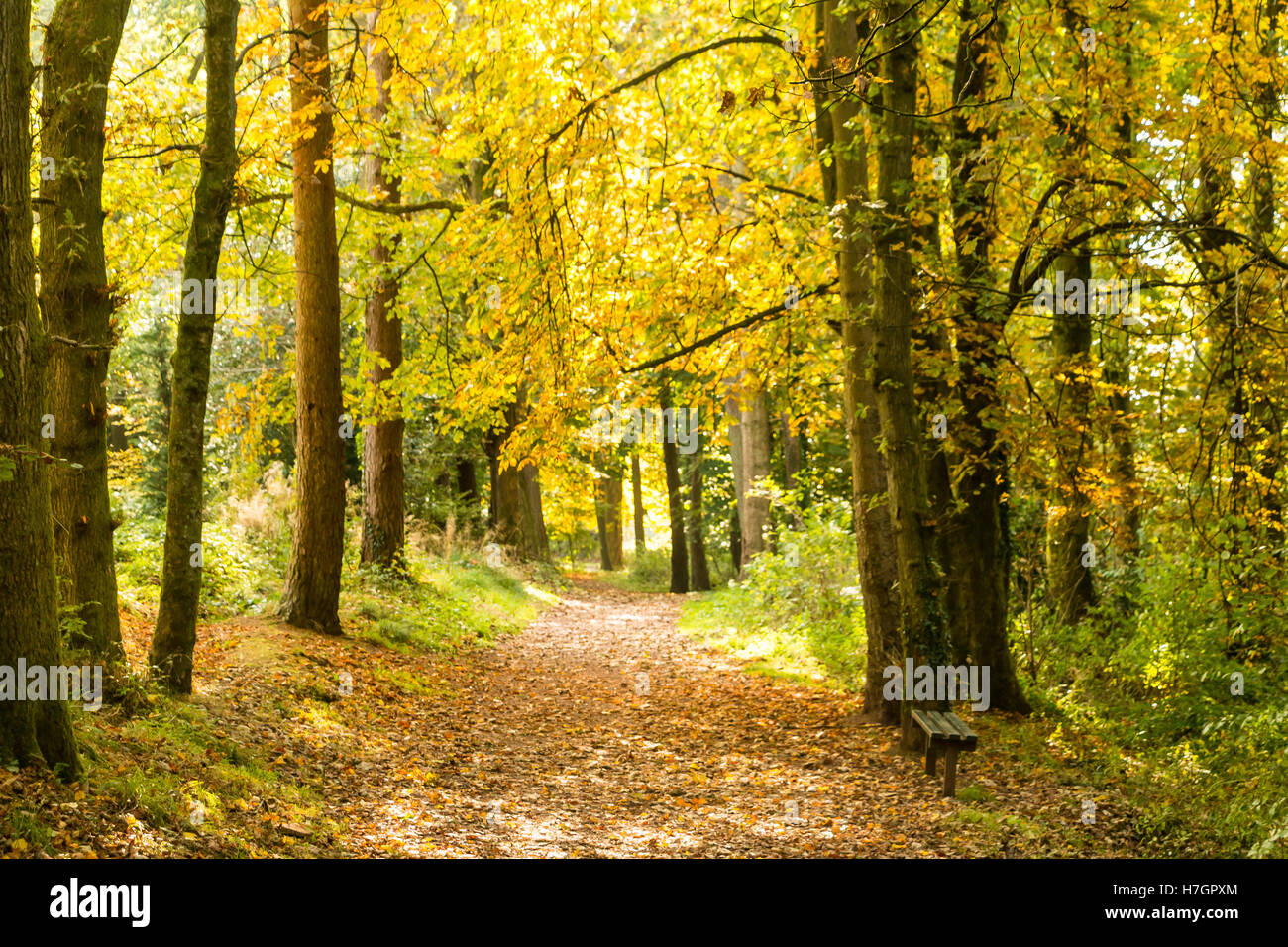 Autumn colours and trees,  woodland walk, Cyfarthfa Park, Merthyr Tydfil, South Wales - Stock Image