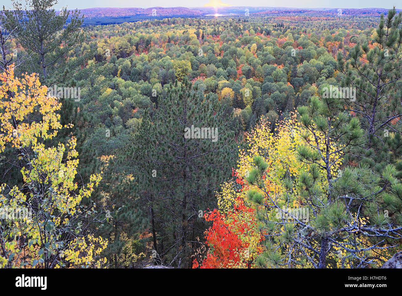 Algonquin colorful trees in fall - Stock Image