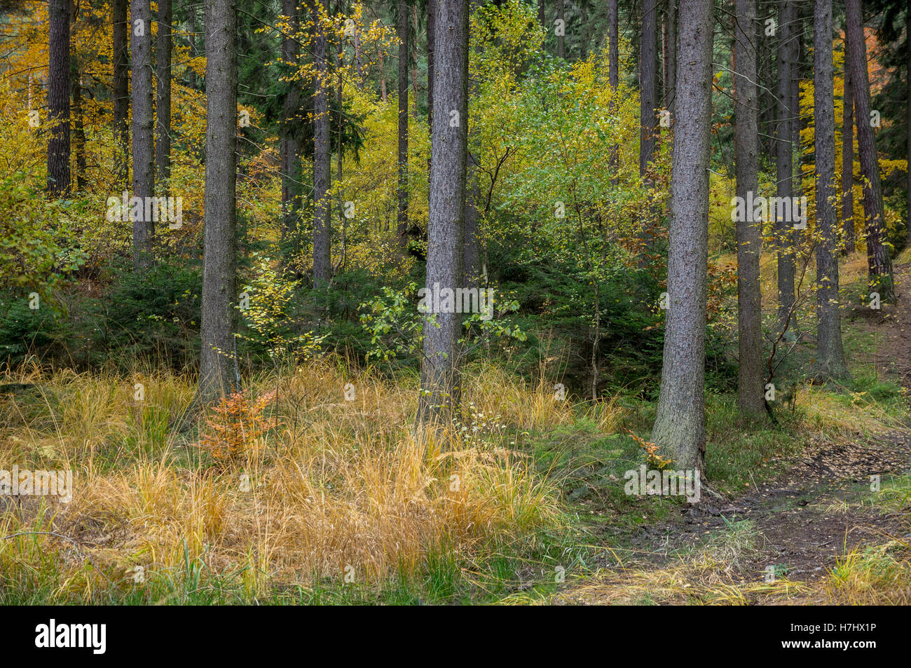 Central European colorful mixed forest in autumn - Stock Image