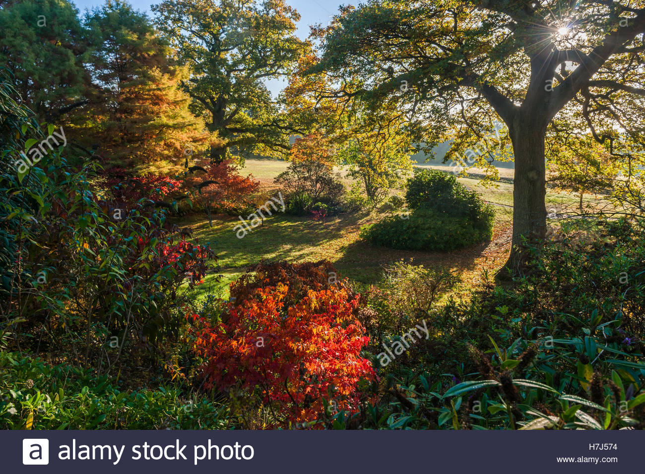 trees and shrubs in autumn - Stock Image