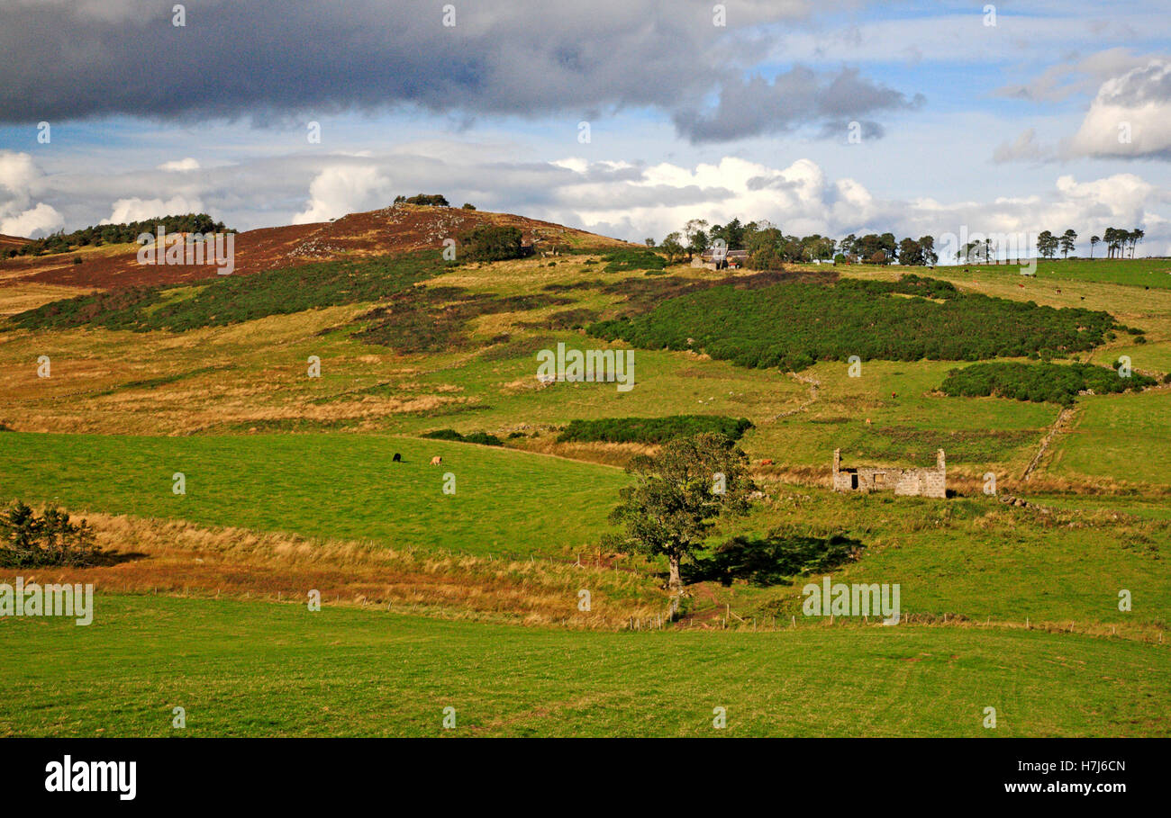 A landscape with ruined croft at Cabrach, Aberdeenshire, Scotland, United Kingdom. - Stock Image