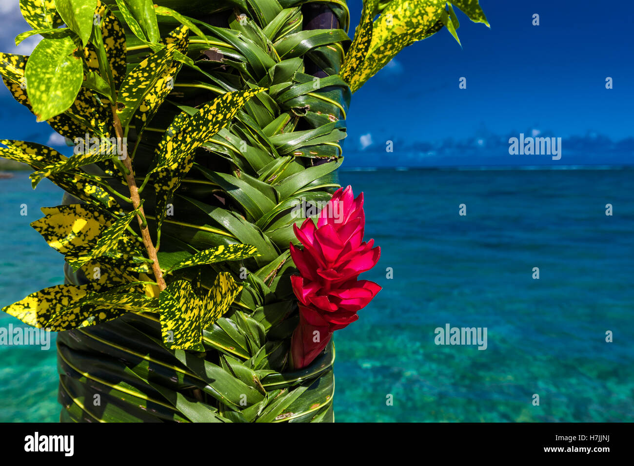 Teuila red flower used for wedding decoration agains beach on samoa teuila red flower used for wedding decoration agains beach on samoa islands junglespirit Choice Image