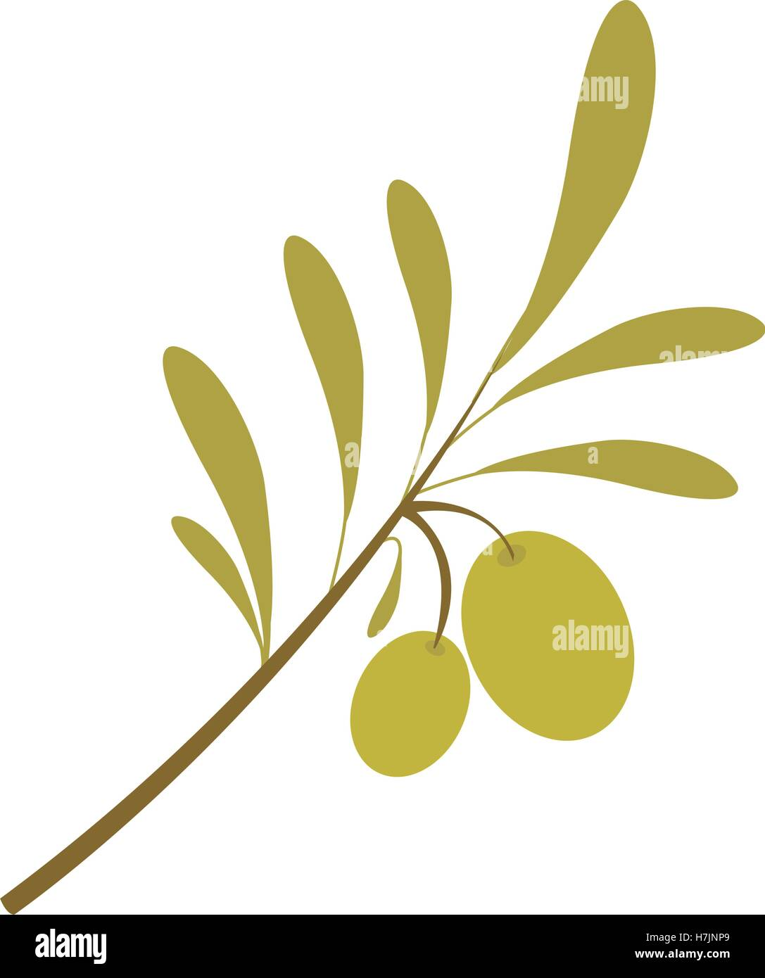 olive plant food fruit oil organic natural vector isolated illustration - Stock Vector