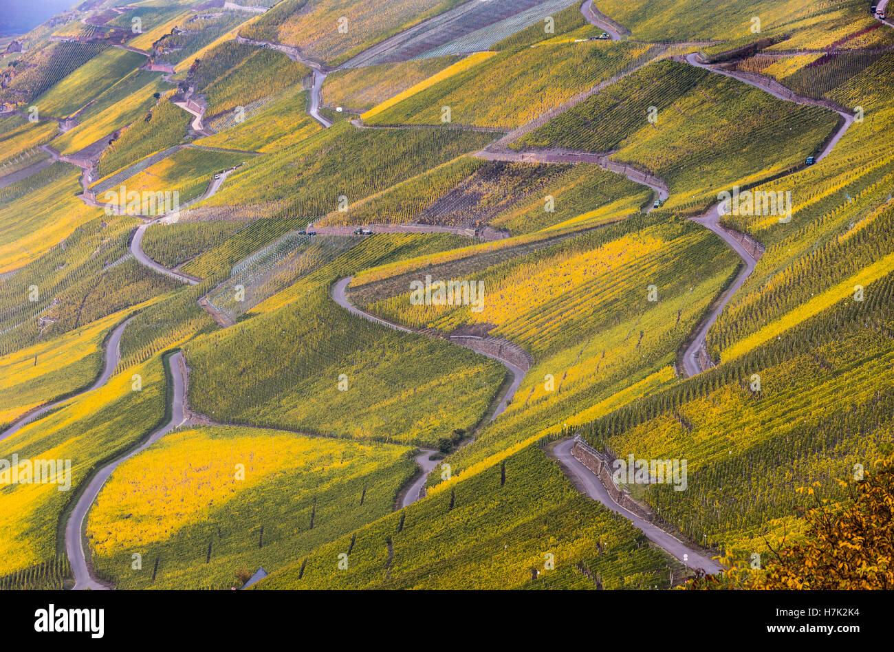 Moselle Valley, vineyards, mostly Riesling grapes, between Bernkastel-Kues and Graach, Germany, fall, autumn colors, Stock Photo