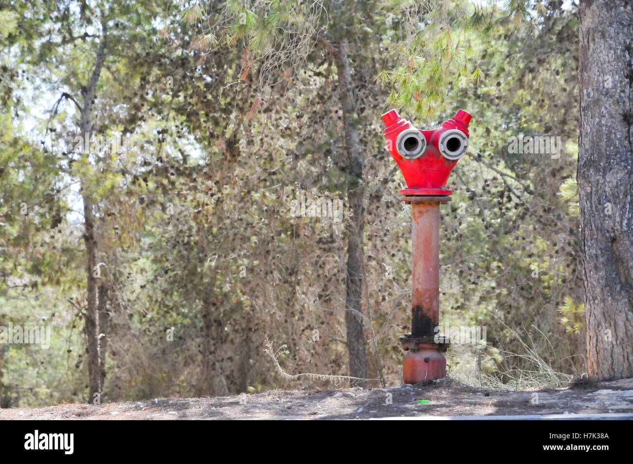 Red Fire hydrant in a pine tree forest - Stock Image