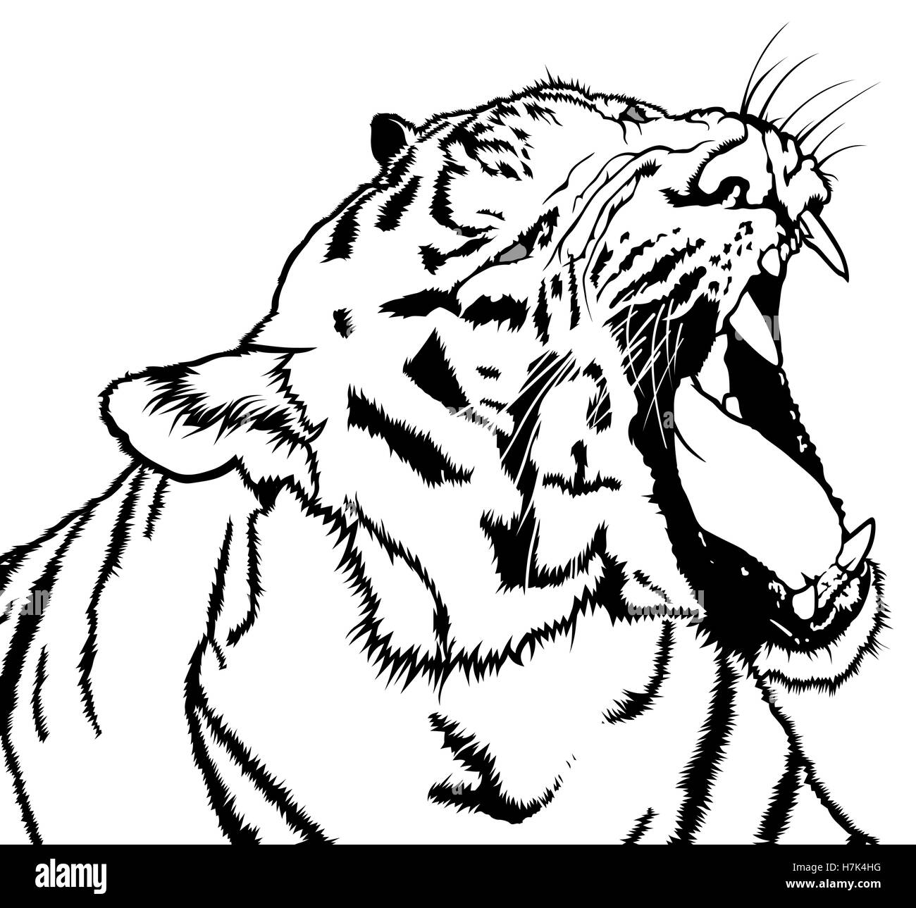 Roaring Tiger - Stock Image