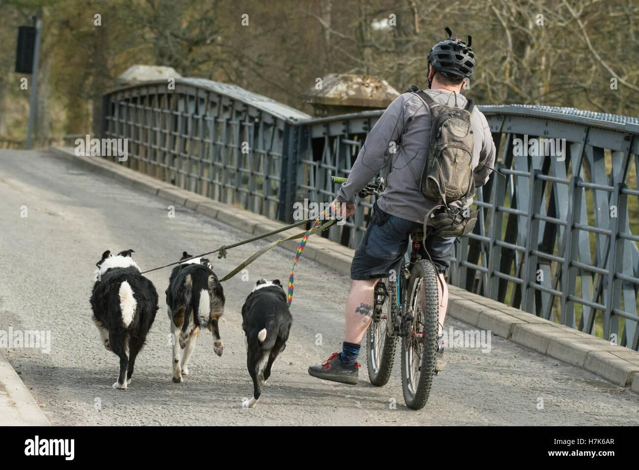 dog walking on a bike - Stock Image