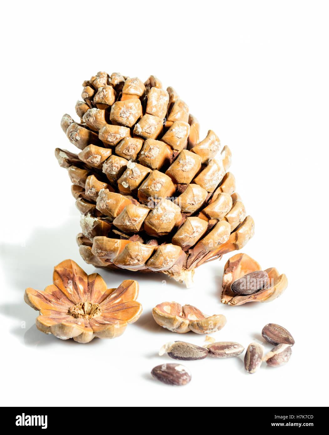 Stone Pine, Pinje (Pinus pinea) - Stock Image
