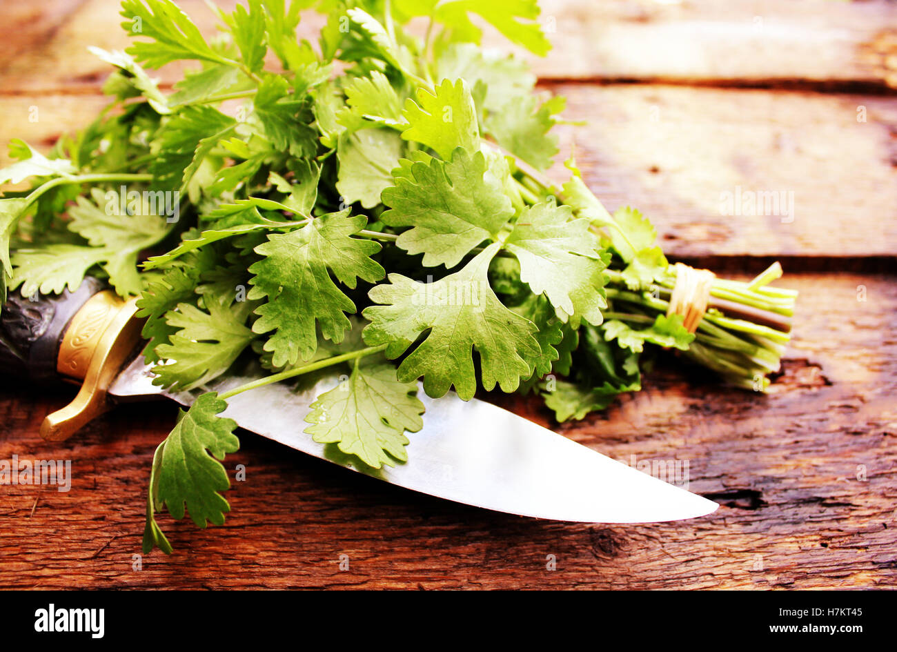 Bunch of coriander leaves on a wooden table - Stock Image