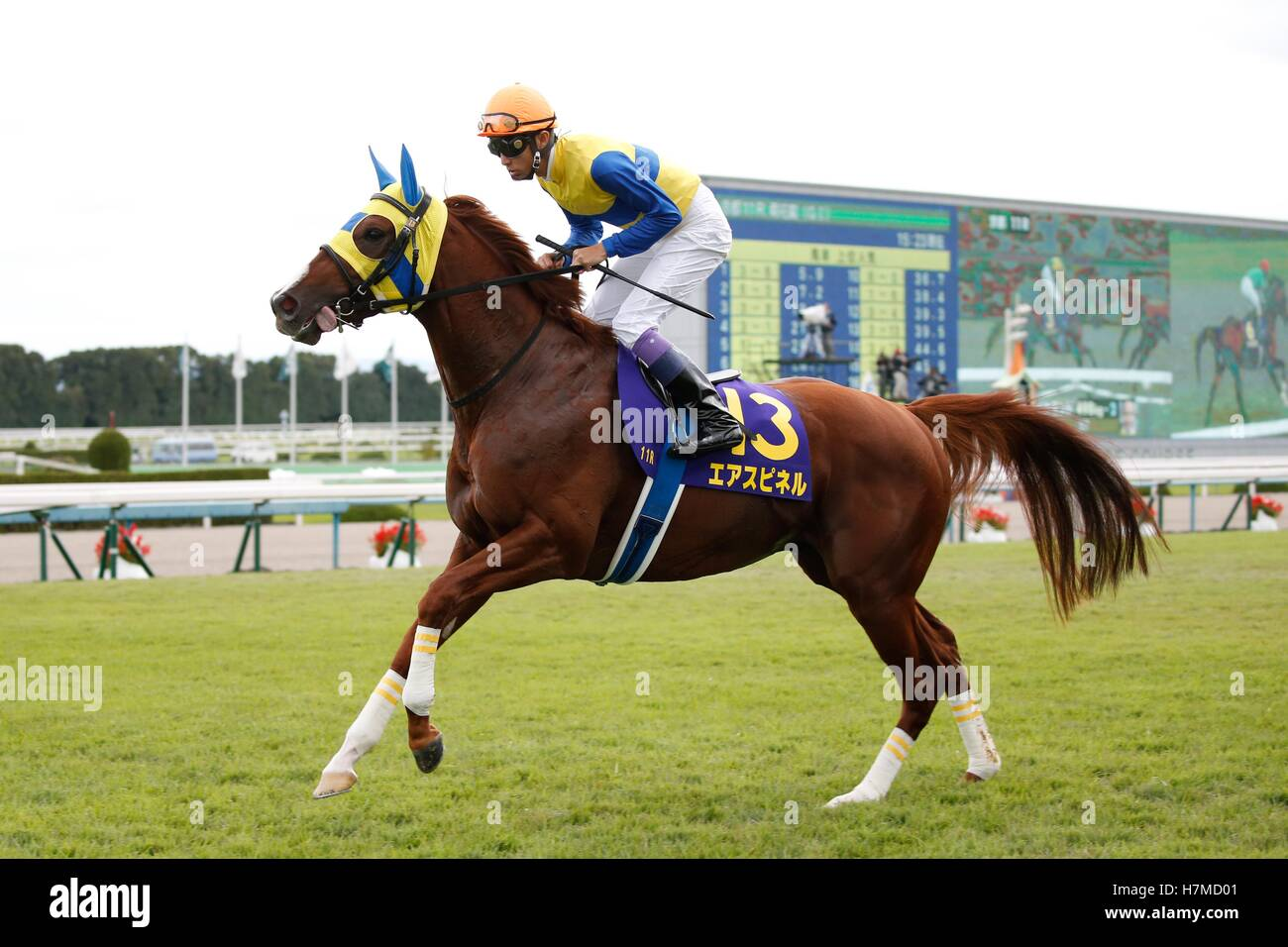 Kyoto, Japan. 23rd Oct, 2016. Air Spinel (Yutaka Take) Horse Racing : Air Spinel ridden by Yutaka Take before the Stock Photo