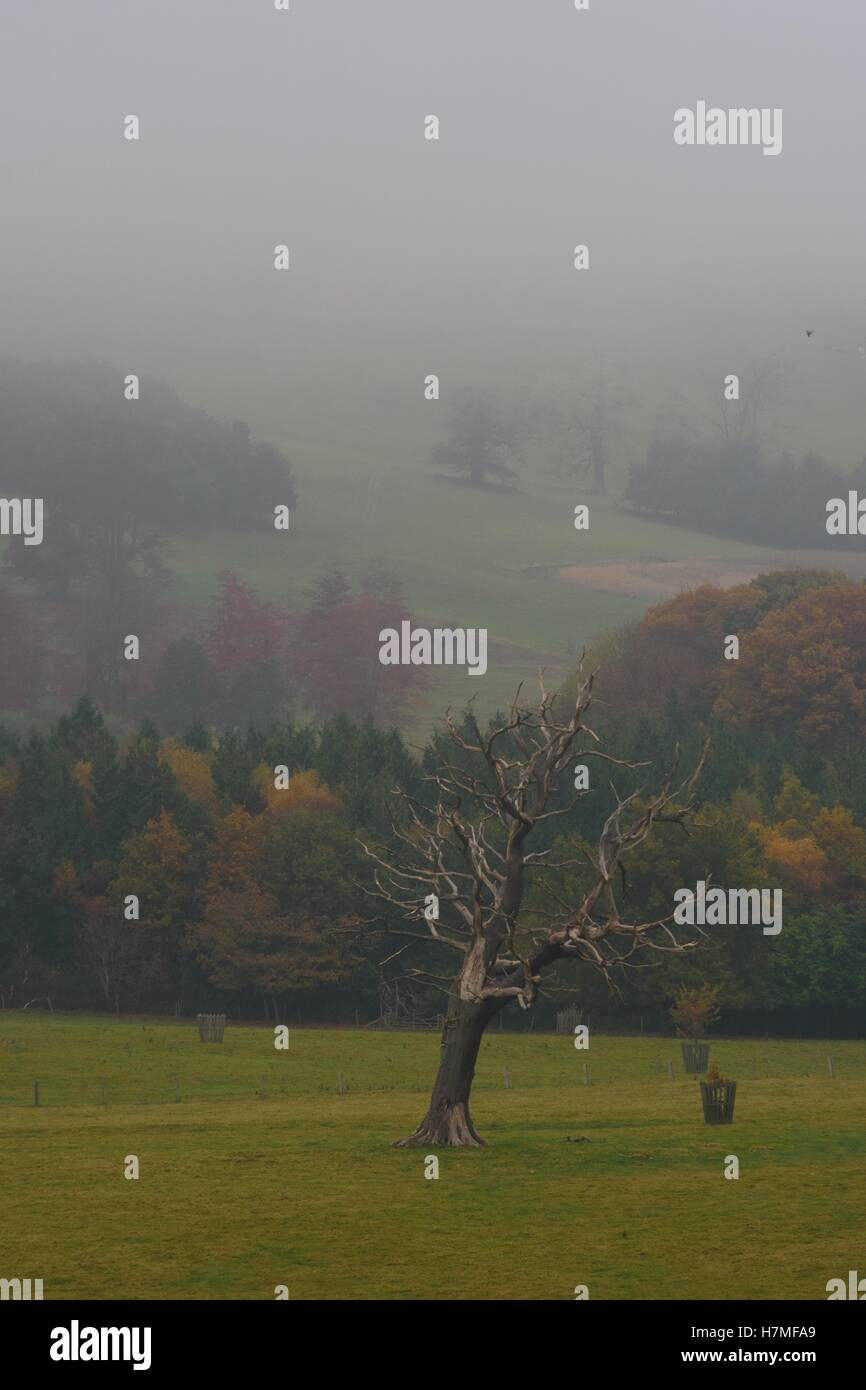 welsh landscape lone tree woodland area - Stock Image