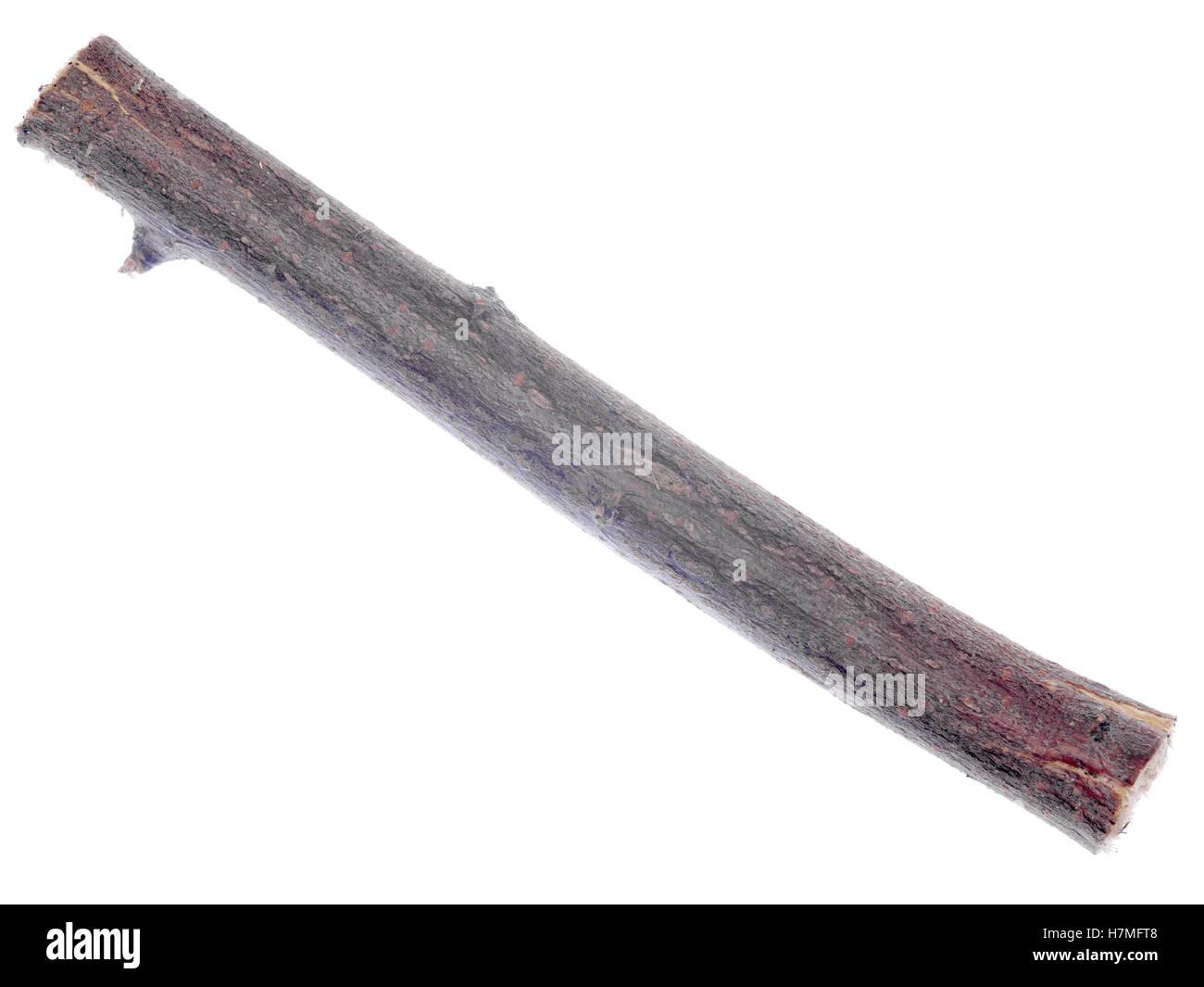 twig isolated on white background - Stock Image