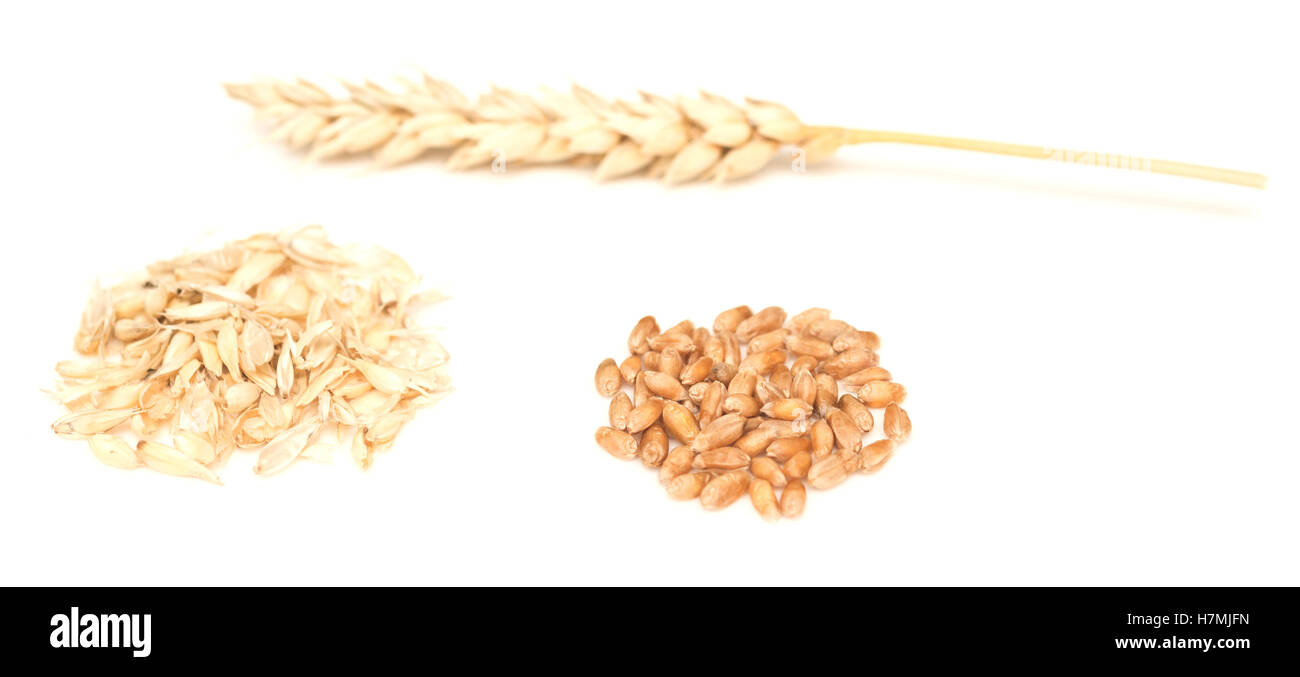 Wheat Kernel Isolated Stock Photos & Wheat Kernel Isolated