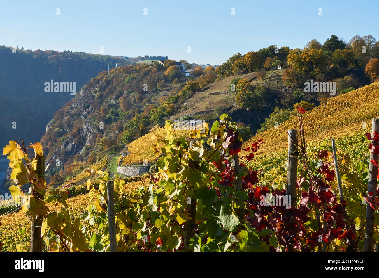 Loreley and vineyards at Rhine valley, Germany. Stock Photo