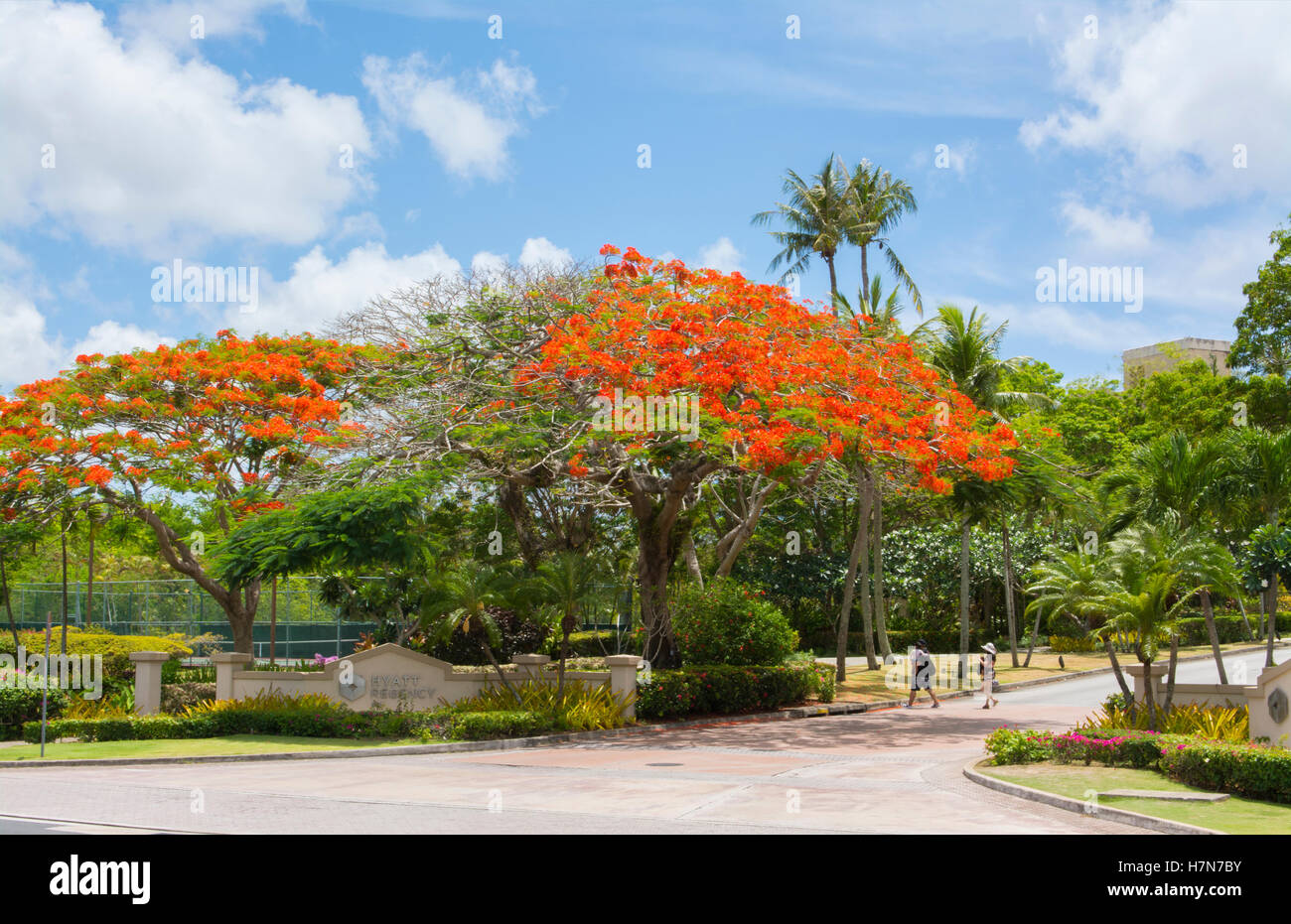 Guam USA Territory Tumon Bay road with red Royal Poinciana tree and clouds - Stock Image