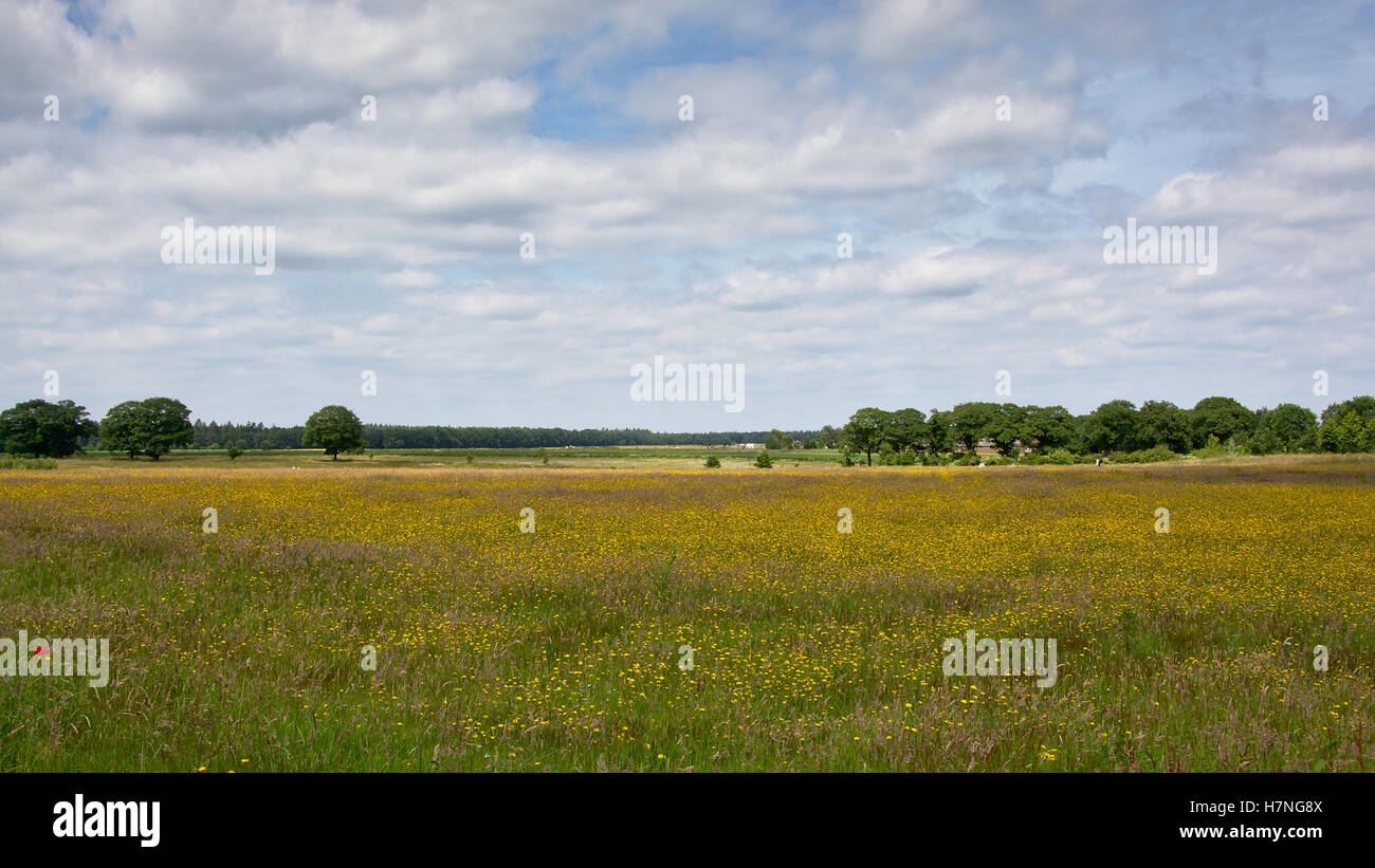 Meadow with flowers and trees, Hoge Veluwe national parc, the Netherlands - Stock Image
