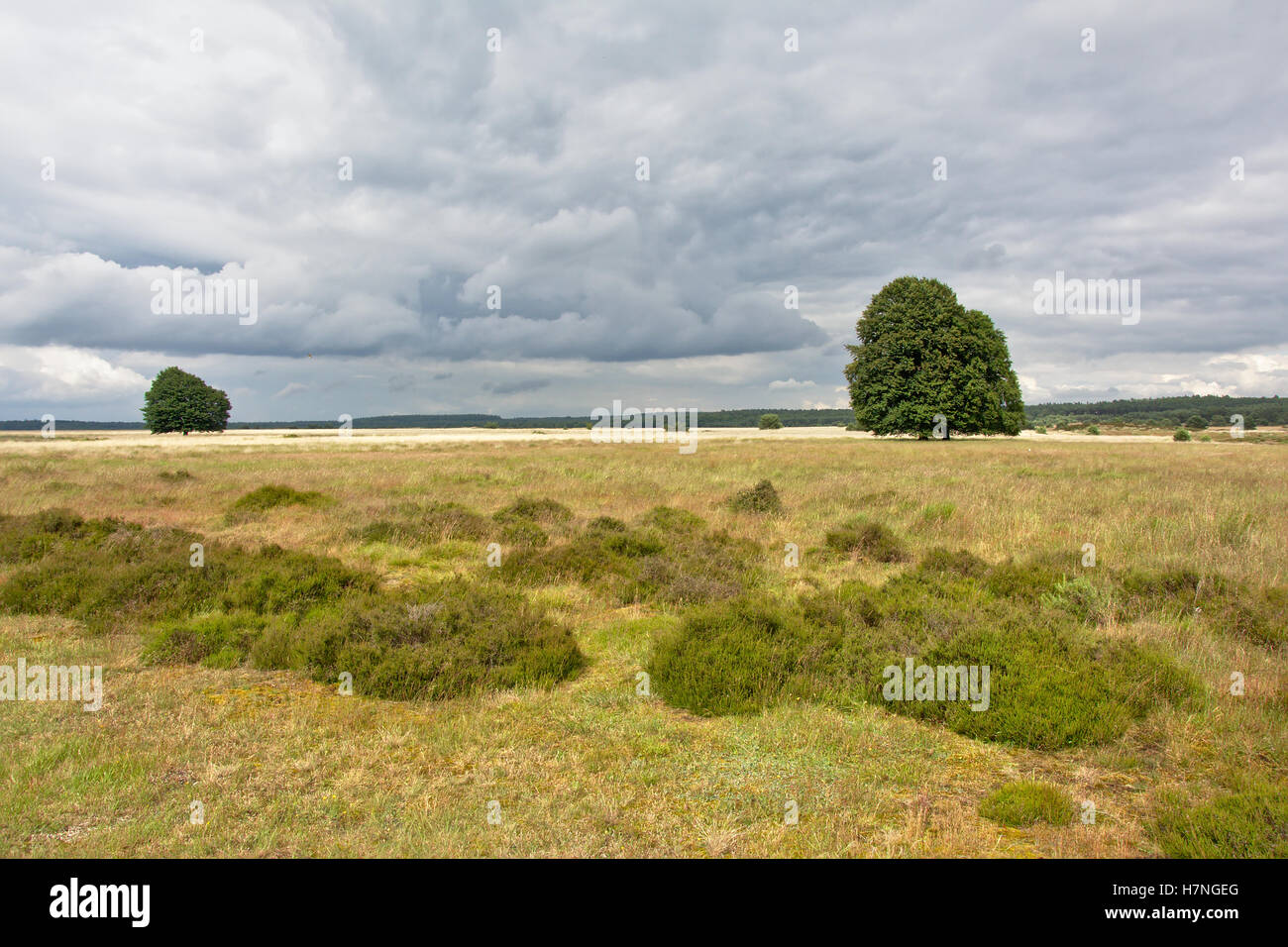 Cloudy heath landscape at Hoge Veluwe national parc, the Netherlands - Stock Image