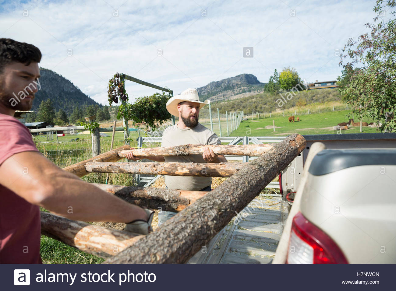 Male farmers lifting wooden fence onto truck bed on sunny farm - Stock Image