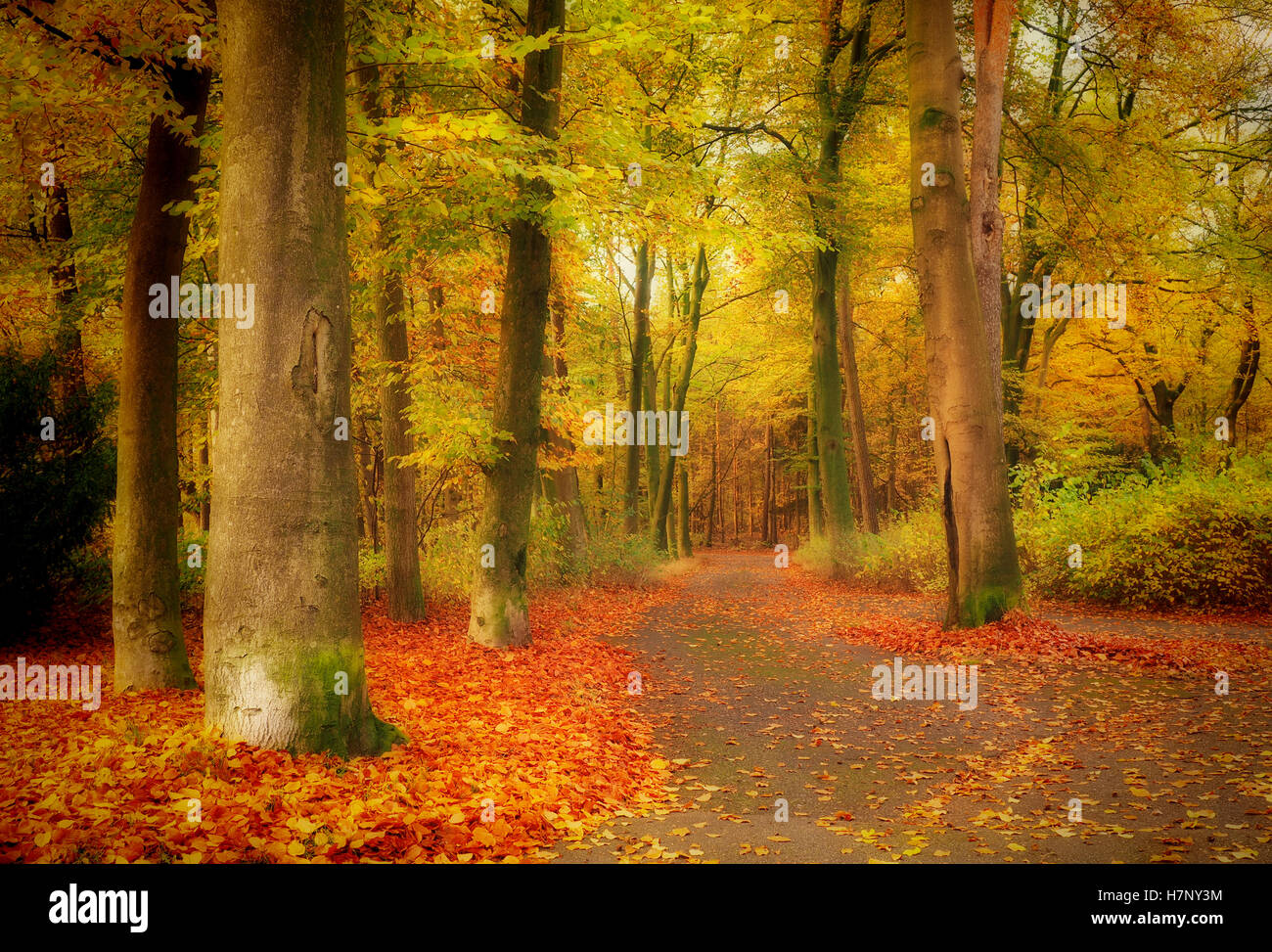 Mystical forest, colorful autumn background - Stock Image