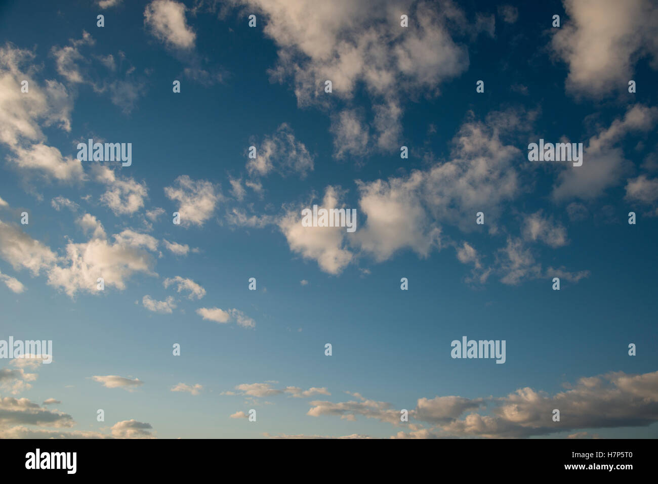 Golden hour sun tinted fluffy white clouds against a blue sky, background image - Stock Image