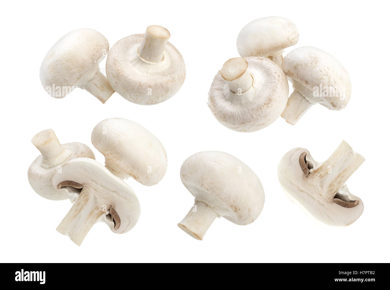 Mushroom champignon isolated on white background - Stock Image