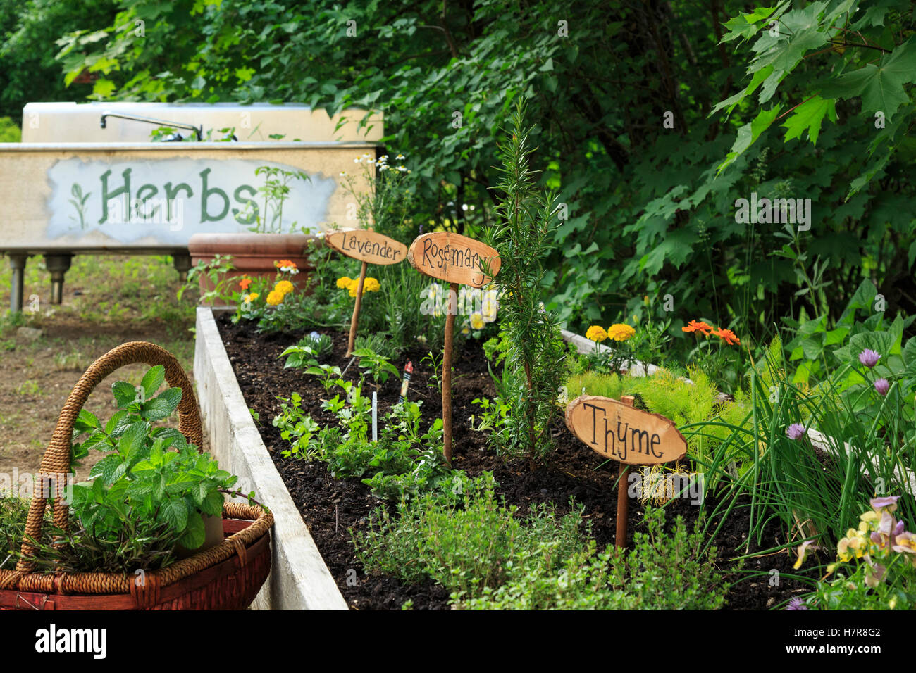 Herb Garden With Signs, New Hampshire   Stock Image