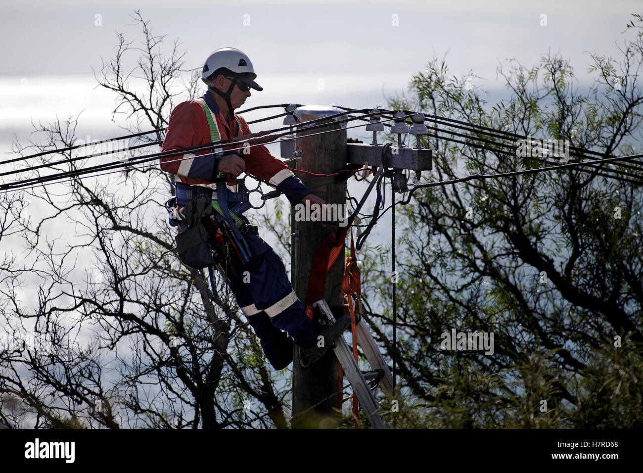 power company worker on ladder installing high voltage power cables - Stock Image
