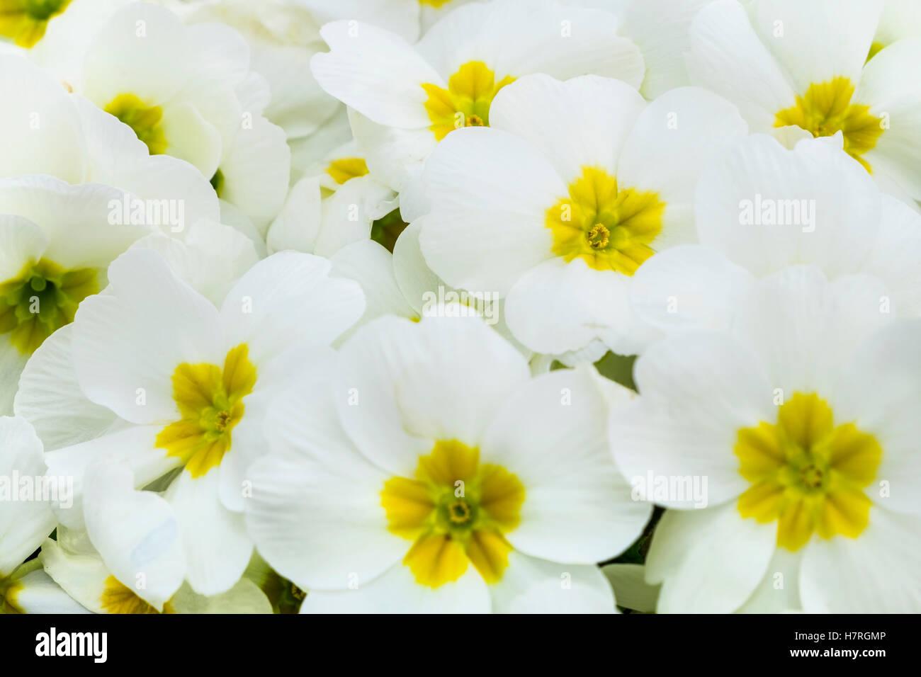 White And Yellow Flowers In The Dublin Botanic Garden Dublin Stock