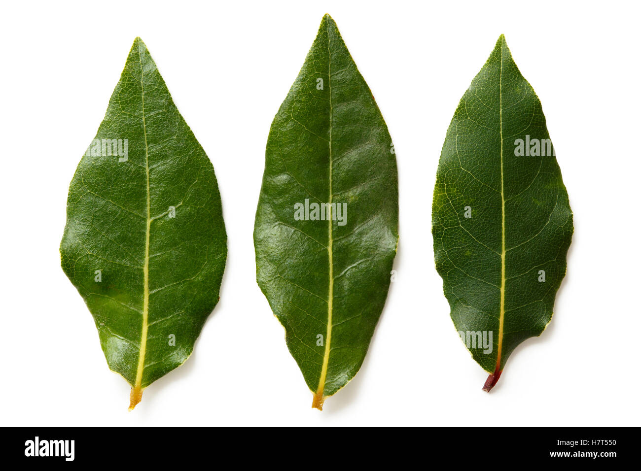 Three bay leaves isolated on white from above. - Stock Image