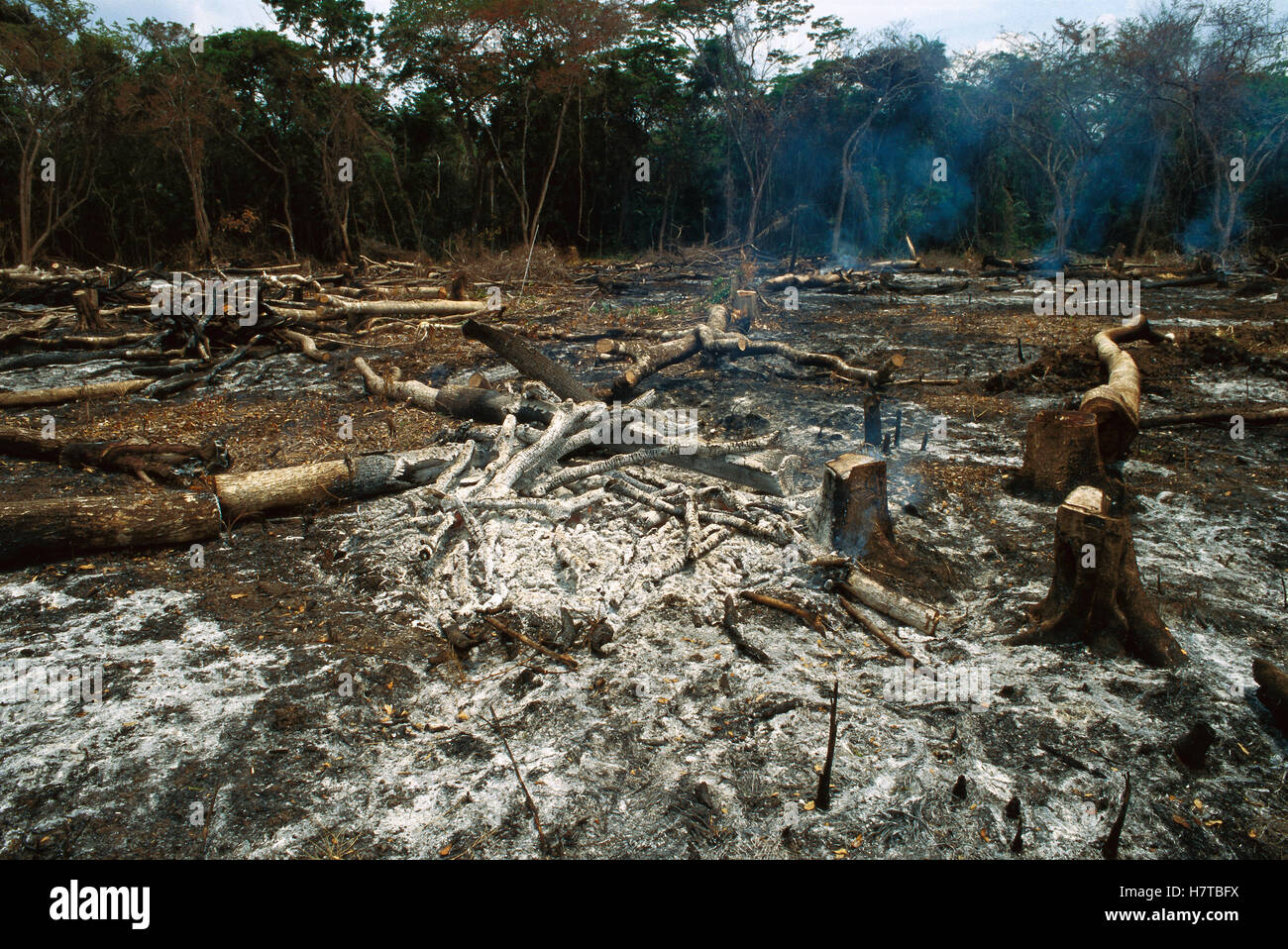 Slash and burn rainforest destruction for agriculture Belize