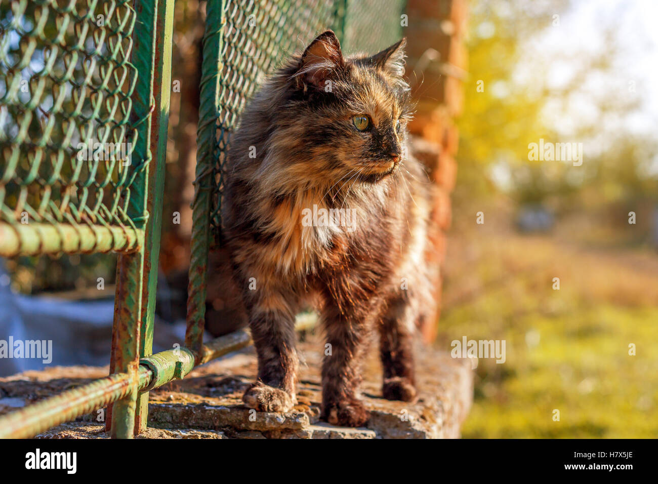 Cat siting on a fence at sunset - Stock Image