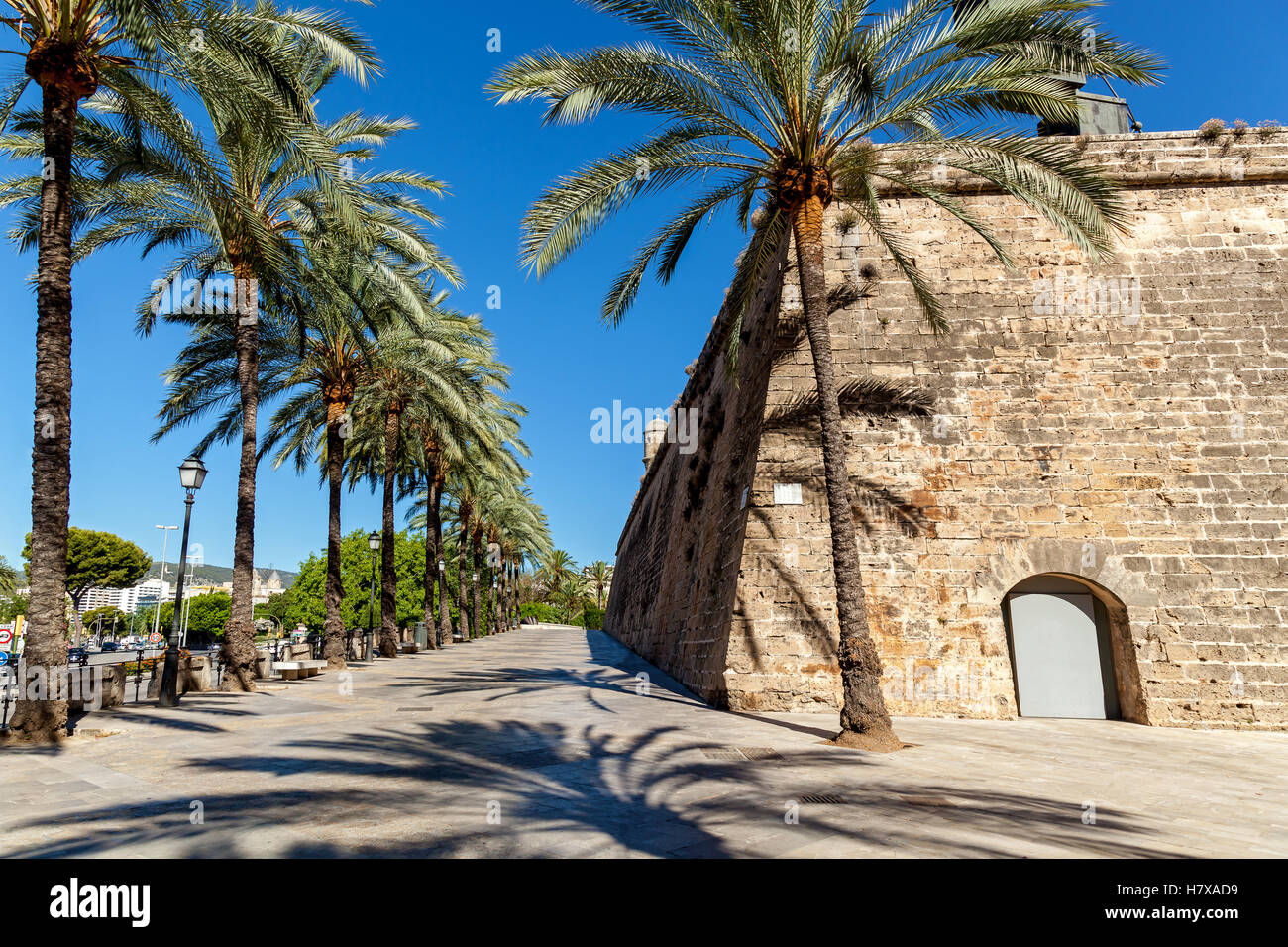 Walking alley with palms near an ancient castle,Palm alley - Stock Image