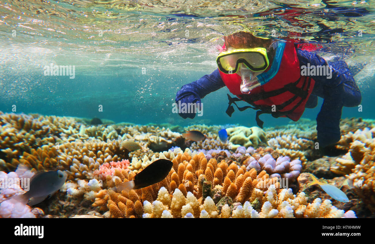 Child (girl age 5-6) snorkeling dive in the Great Barrier Reef in the tropical north of Queensland, Australia - Stock Image