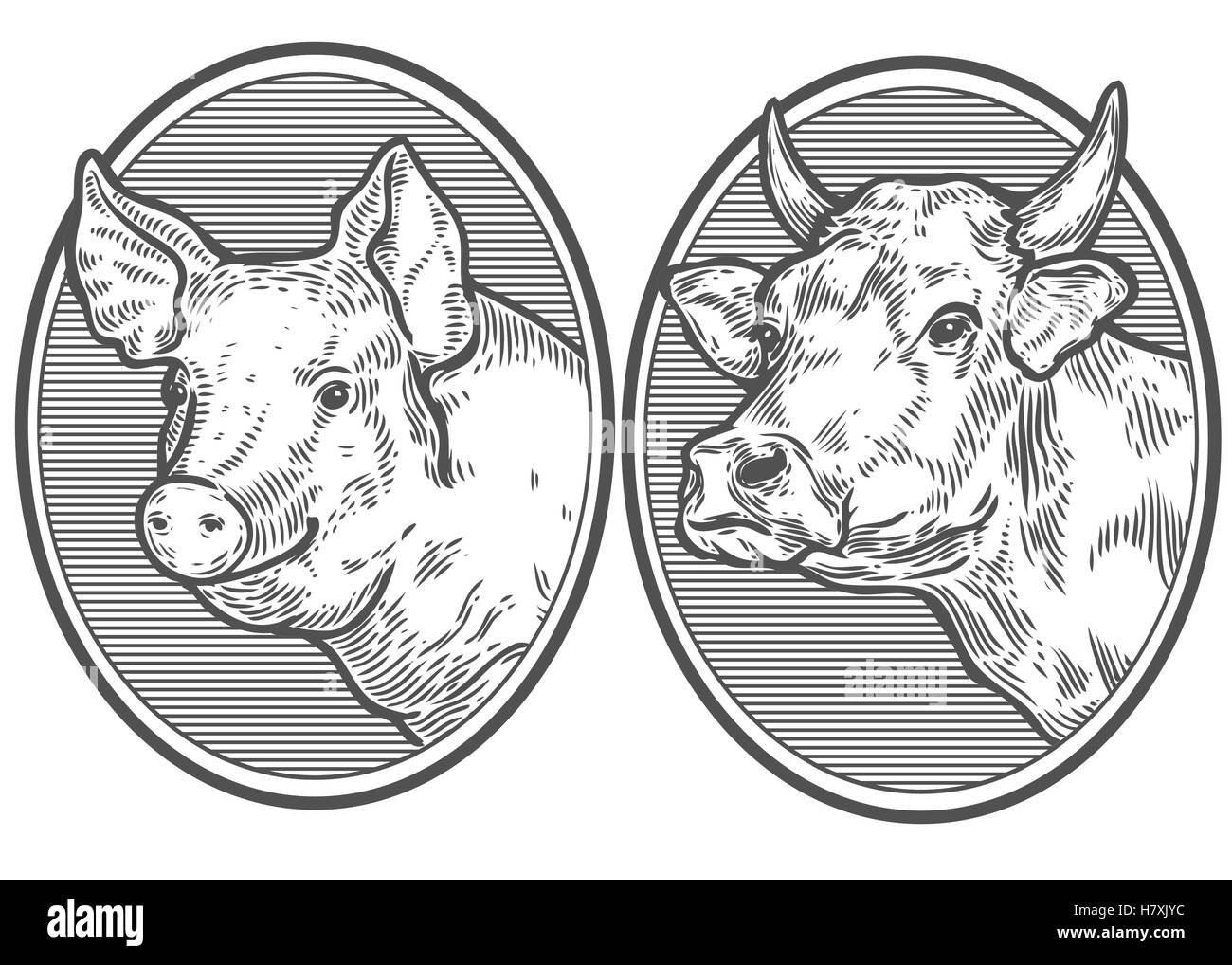 bcff467cfc1 Cow and pig head. Hand drawn sketch in a graphic style. Vintage vector  engraving